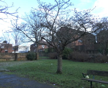 the Cherry Tree in Christchurch Gardens in January, with no leaves, surrounded by rubbish and a cabbage sitting on the bench