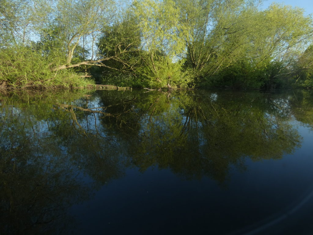 River Lea with willow trees reflected in the water