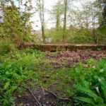 a concrete plinth covered with moss, leaves, wild garlic, tree trunks and trees