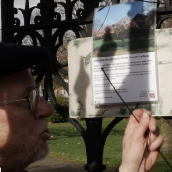 Frank Abbott in a cap tying a poster to the metal gates of Christ Church Gardens, the poster has a picture of the cherry tree in full blossom