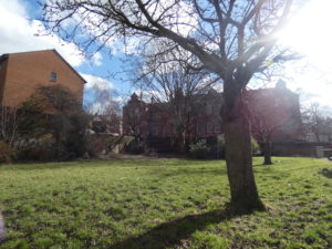 the blossom tree, Christ Church Gardens, houses, sky and sun and Primary in the distance