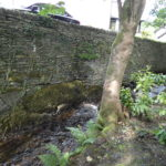 a high dry stone wall with a car and house above, the river below and a tree, fern, rodedendron bushes