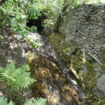river flowing along the side of a high dry stone wall with moss on it's lower side, fern, trees