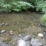 clear water with rocks below the surface and emerging from the water, the banks with grasses and trees