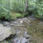clear water, slate, rocks, trees, a mossy bank