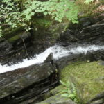 a thin water fall between slate, large moss covered rocks and a beech tree above