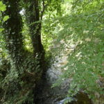 looking down on a river (Millbeck) with trees on either side