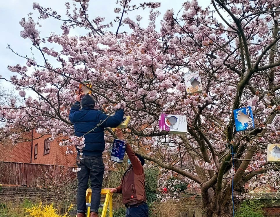 Frank Abbott and Iain Brookes putting light boxes in the blossom tree